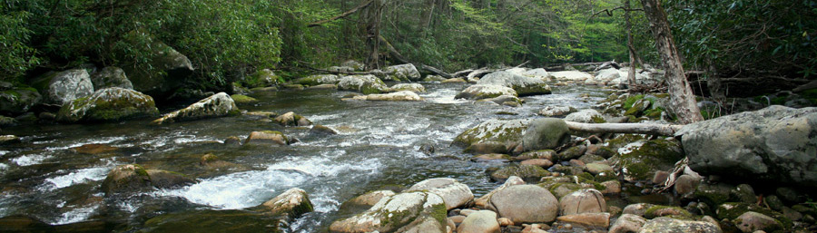 Beautiful River in the Great Smoky Mountains